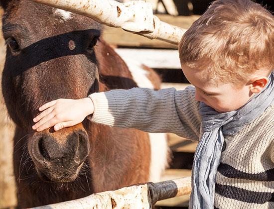 Baby Club au centre équestre près de Steenvoorde et Hazebrouck
