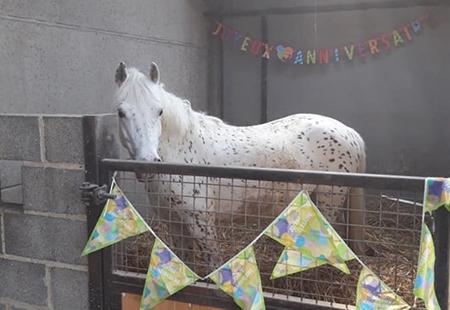 Installations équestres de la pension pour chevaux près de Steenvoorde et Hazebrouck